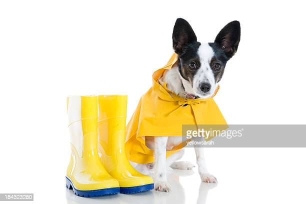 Dog And Rain Boots