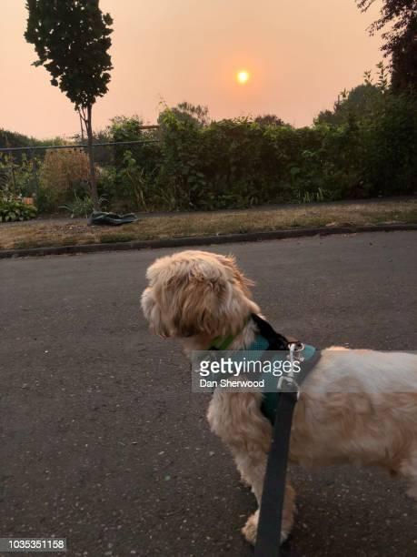 Dog and Setting Sun