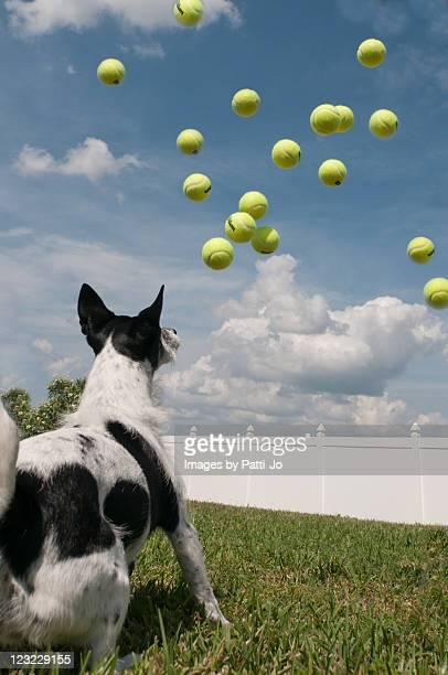 dog and tennis ball - grand groupe d'objets photos et images de collection
