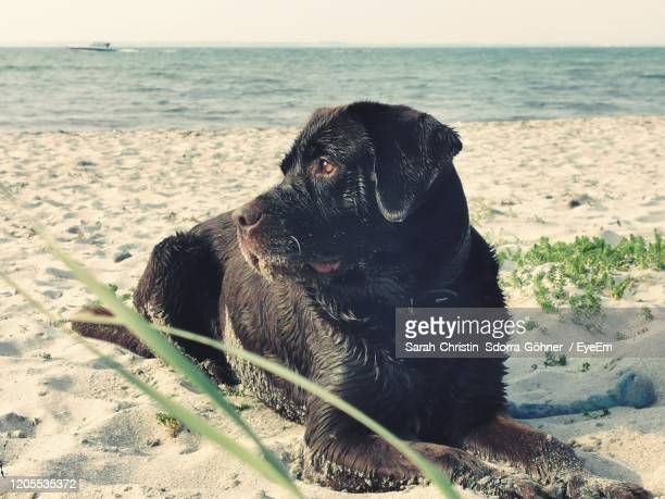 dog and the sea - sarah sands stock pictures, royalty-free photos & images