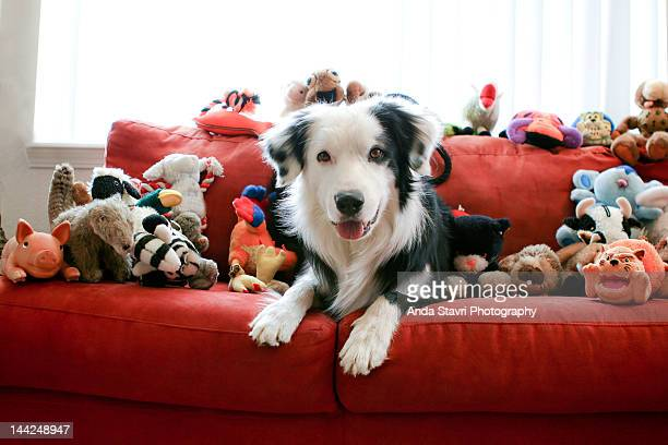 dog and toys - large group of objects stock pictures, royalty-free photos & images