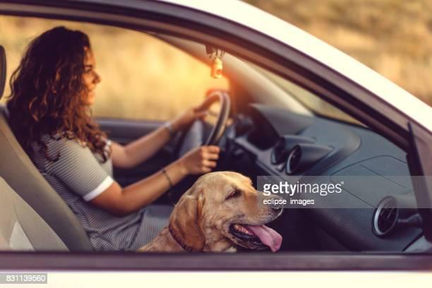 Hund und Frau auf Abenteuer im Auto