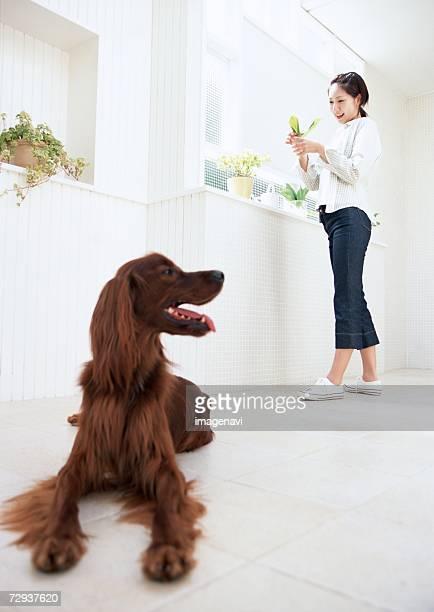 dog and woman - fascinante imagens e fotografias de stock