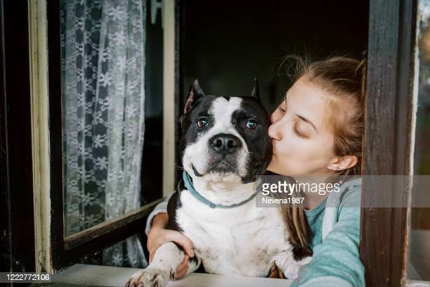 dog and young female look out a home window - pit bull terrier stock pictures, royalty-free photos & images