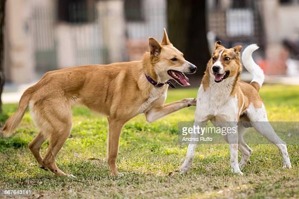 Dog Appreciation Day