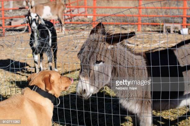 Dog approaching a donkey.