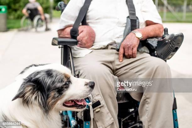 dog as emotional support animal for disabled senior man - training grounds imagens e fotografias de stock