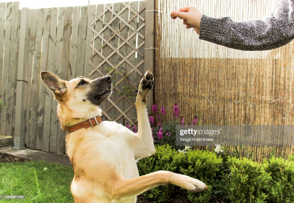 Dog asking for a snack : Stock Photo