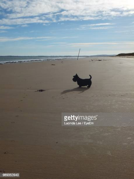 dog at beach against sky - lucinda lee stock photos and pictures