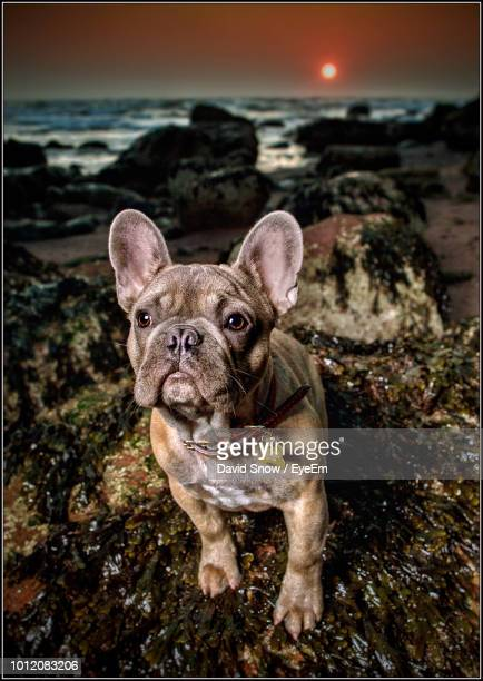 dog at beach during sunrise - pet equipment stock pictures, royalty-free photos & images