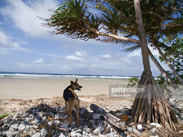 A dog at beachside in Marshall Islands