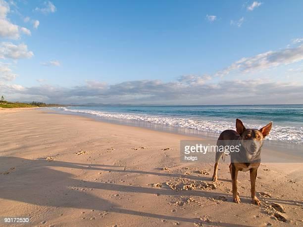 Dog at Byron