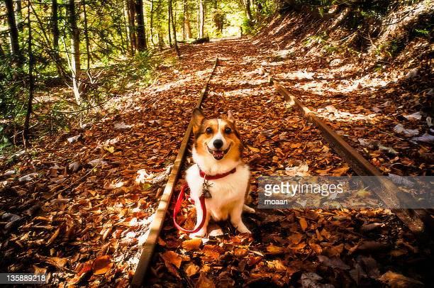 dog at discontinued line - mutsu imagens e fotografias de stock