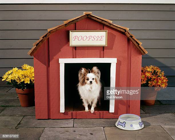 Dog at Entrance to Doghouse