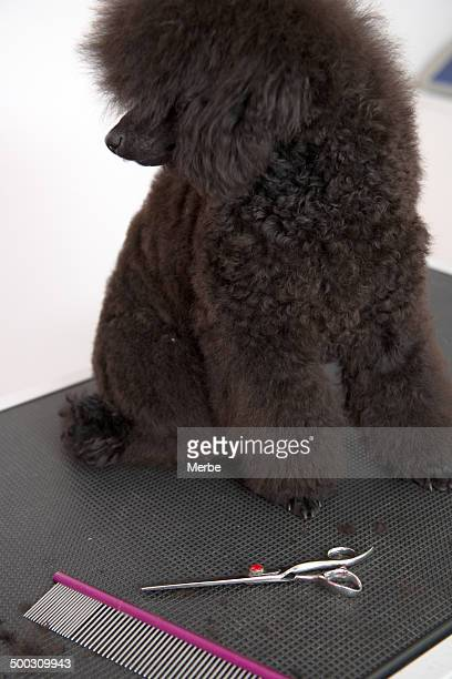 Dog at hairdresser