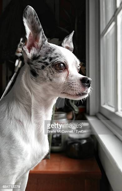 dog at home - mcconnell stock pictures, royalty-free photos & images