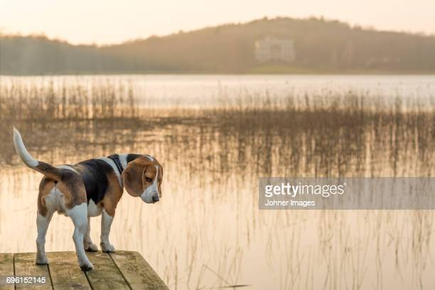 Dog at lake