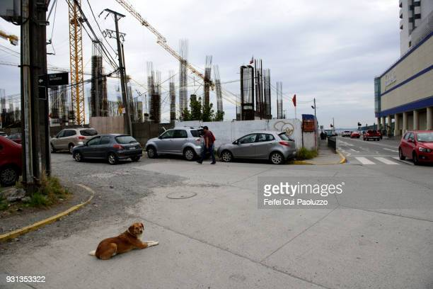 A dog at roadside of city center Puerto Montt, Los Lagos region, Chile