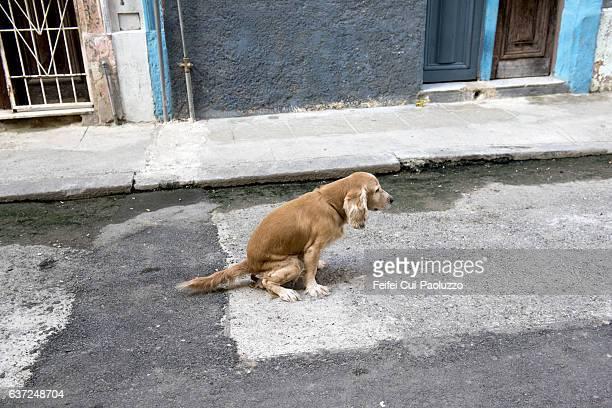 a dog at street of centro havana in cuba - excremento fotografías e imágenes de stock