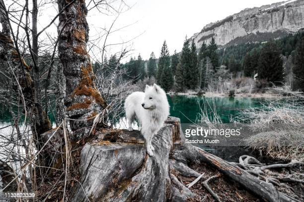 a dog at the lake - wasser stock pictures, royalty-free photos & images