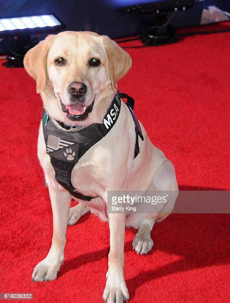 Dog at the premiere of Disney and Marvel Studios's' 'Doctor Strange' at the El Capitan Theatre on October 20 2016 in Hollywood California