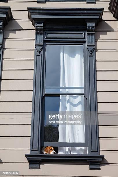 Dog at window. San Francisco.