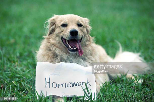 dog ate homework