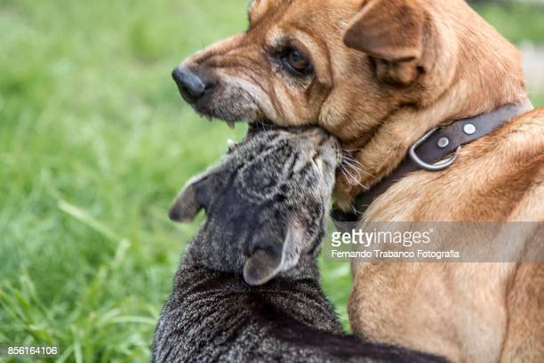 dog attacks cat