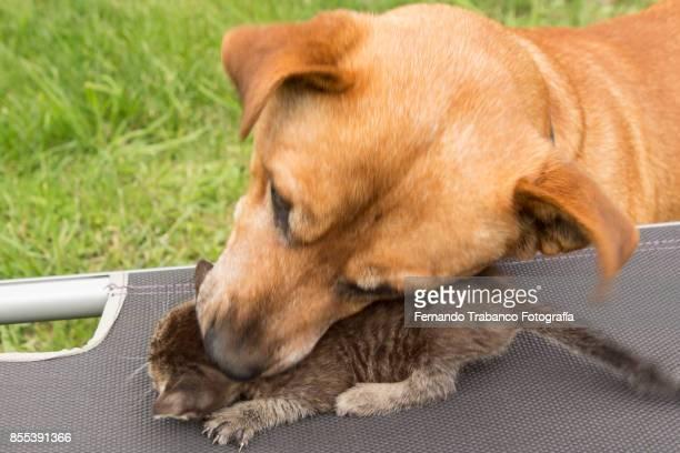 Dog attacks the kitty