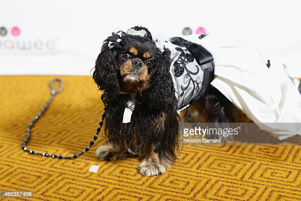 A dog attends the Bideawee Masquerade Ball at Gotham Hall on June 9 2014 in New York City