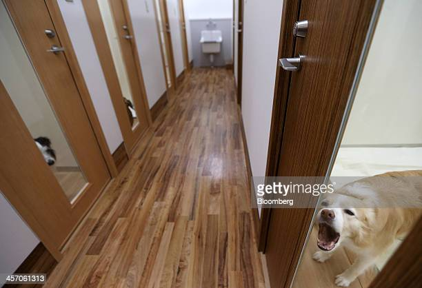 A dog barks from inside one of the deluxe rooms at a hotel for pets at the Pet Mall inside the Aeon Mall Makuhari Shintoshin shopping mall operated...