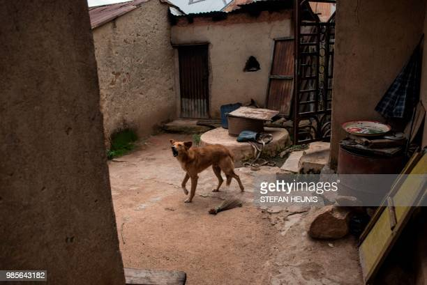 A dog barks in an abandoned burned down house in the Ganaropp village where 35 people were killed by Fulani herdsman in the Barikin Ladi area near...
