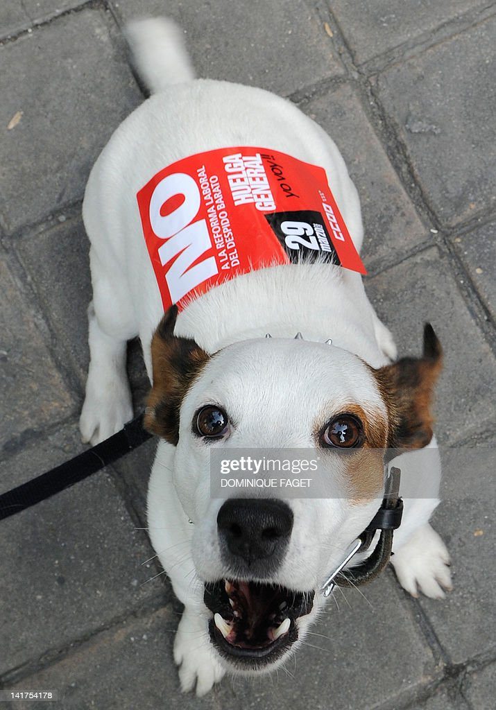 A dog barks with a sticker reading no