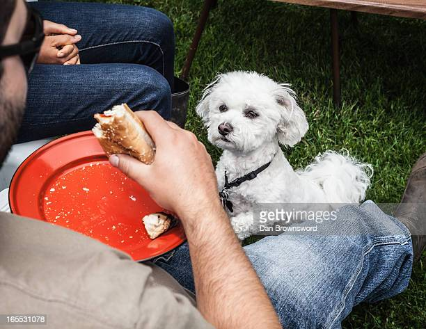 Dog begging for owners food