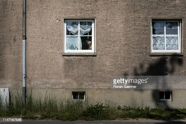 A dog behind a window is pictured on May 31 2019 in Niesky Germany