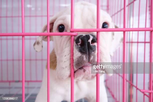 dog behind fence in shelter - centro de acogida a personas sin hogar fotografías e imágenes de stock