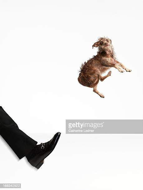 Dog being Kicked into the air by Man's Leg