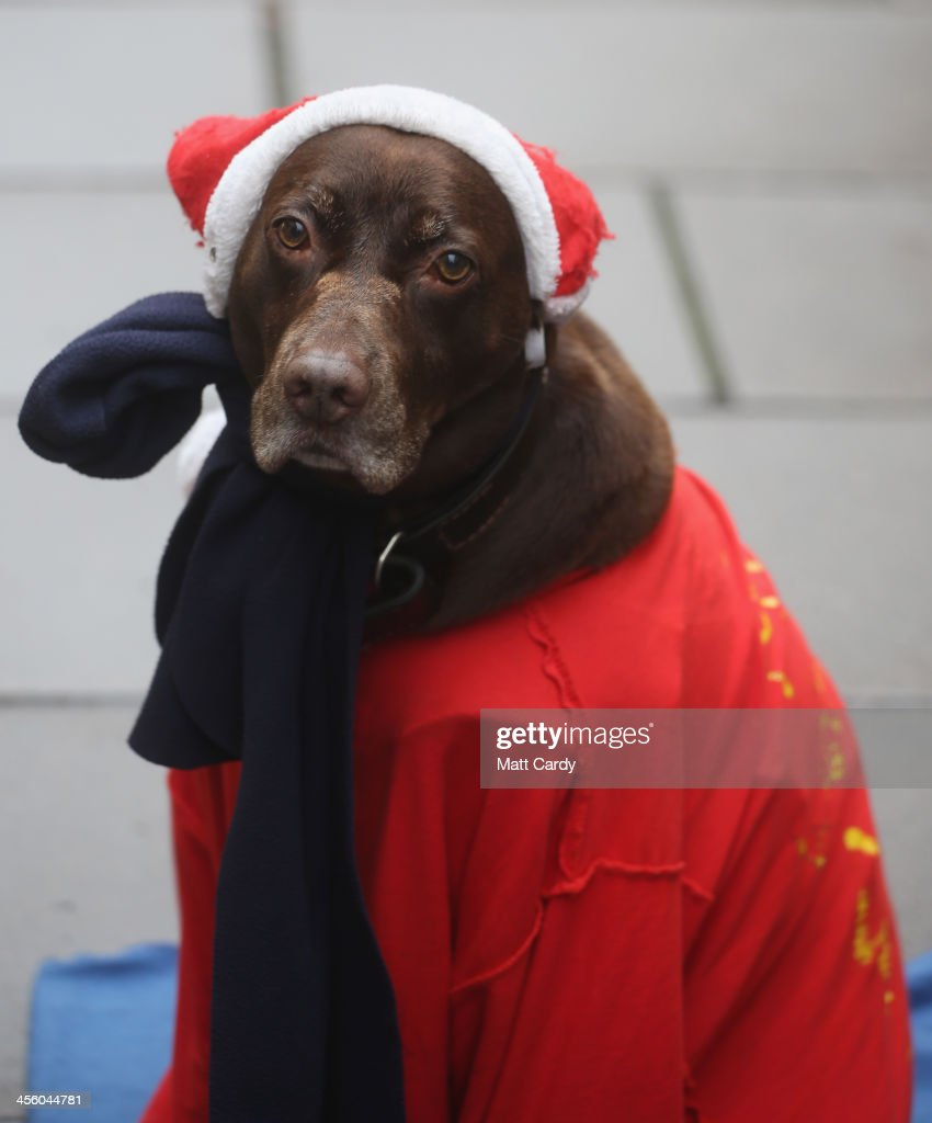 A dog belonging to a Big Issue vendor watches as shoppers pass along the high street in the city centre on December 13, 2013 in Bath, England. As more and more people in the UK shop online, traditional city centres such as Bath are being warned that they will need to offer much more to shoppers than they have previously to encourage visitors if they are to survive commercially in the future.