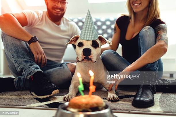 Chien anniversaire.