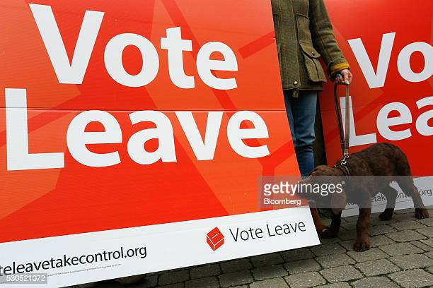 A dog bites a Vote Leave campaign poster during the first day of a nationwide bus tour to campaign for a socalled Brexit in Truro UK on Wednesday May...