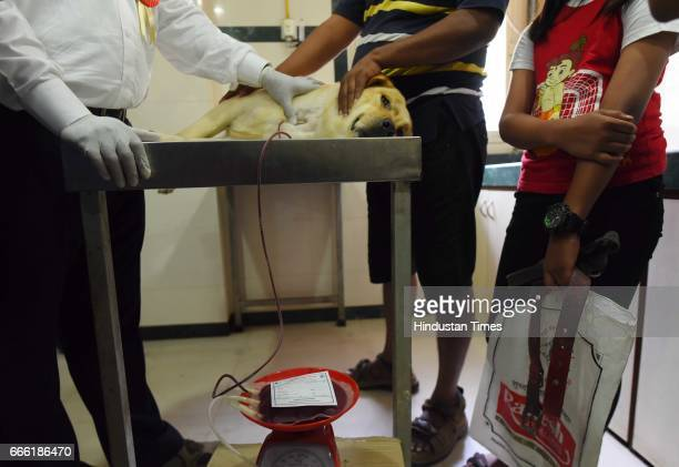 Dog blood donation camp as a part of the Annual Fest Spandan 2017 at Bombay Veterinary College Parel on April 7 2017 in Mumbai India It was a unique...