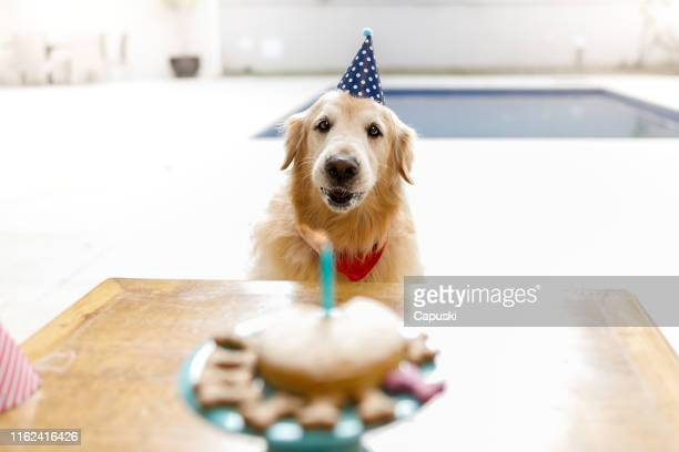 dog blowing cake candle - funny birthday stock pictures, royalty-free photos & images