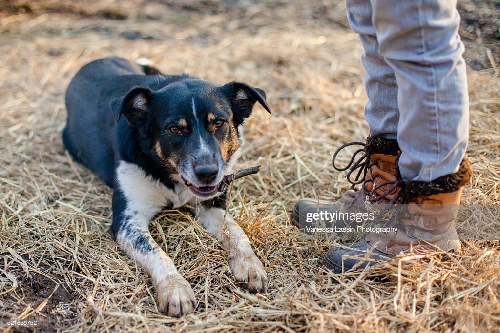 Dog & Boots : Stock Photo