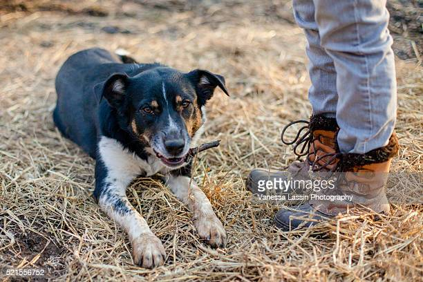 dog & boots - vanessa lassin stock pictures, royalty-free photos & images