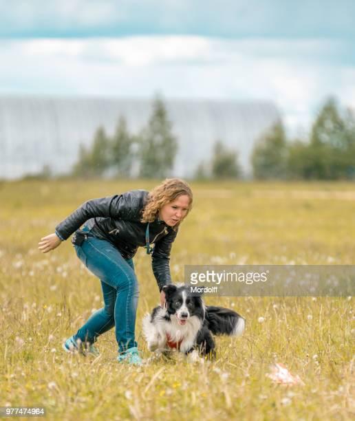 perro border collie a partir - collie fotografías e imágenes de stock