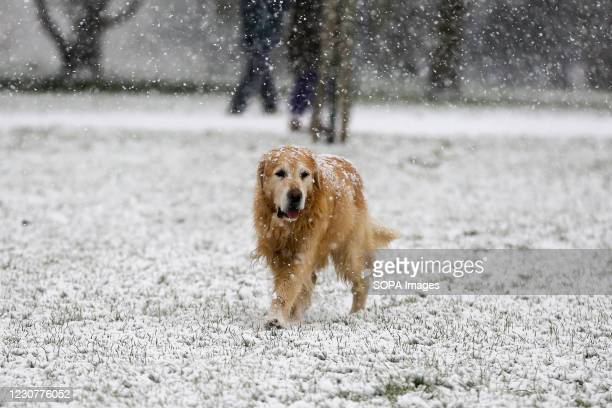 Dog braves the snow in Finsbury Park, north London as large parts of the UK are expected to be blanketed in snow and freezing conditions. According...