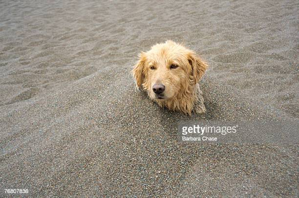 World's Best Dog Burying Stock Pictures, Photos, and ...