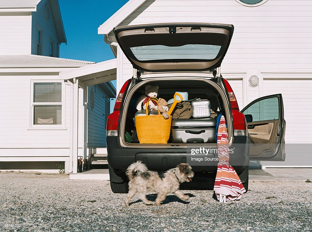 Dog by car full of luggage : Stock-Foto