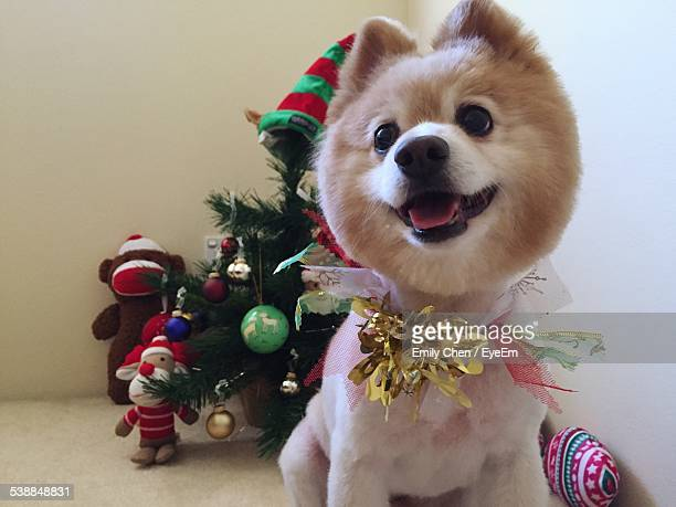 Dog By Christmas Tree At Home