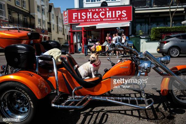A dog called Gipsy sits on a trike motorcycle parked in front of a Fish and Chip shop during the warm weather on Bank Holiday Monday on May 7 2018 in...